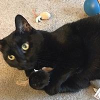 Adopt A Pet :: Jasmine-$65-CATNIP, BIRDS & U - Hillside, IL