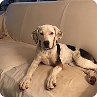Adopt A Pet :: Snowball -Courtesy List - Richmond, VA
