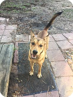 Shepherd (Unknown Type) Mix Dog for adoption in Wellesley, Massachusetts - Sally