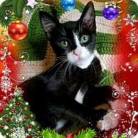Adopt A Pet :: Dinah - Lodi, CA