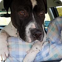 Adopt A Pet :: REX - Maybrook, NY