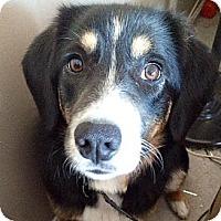 Adopt A Pet :: Tess - Saskatoon, SK