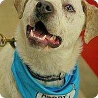 Adopt A Pet :: Dabney - Piqua, OH