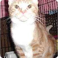 Adopt A Pet :: Neenyo - Clementon, NJ