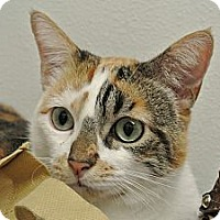 Adopt A Pet :: Kendall - Foothill Ranch, CA