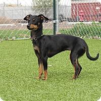 Adopt A Pet :: Elizabeth - Meridian, ID