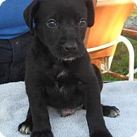 Adopt A Pet :: Kacey- ADOPTION PENDING - Marlborough, MA