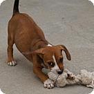 Adopt A Pet :: Saltine Cracker