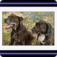 Adopt A Pet :: Baby - Sarasota, FL