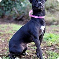 Adopt A Pet :: Katya - San Diego, CA