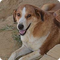 Adopt A Pet :: Justin - Charlemont, MA