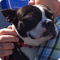 Adopt A Pet :: Emmitt - Scottsdale, AZ