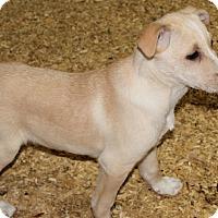 Adopt A Pet :: Safari - Harmony, Glocester, RI