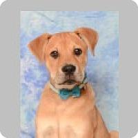 Adopt A Pet :: Conan - Pittsboro, NC