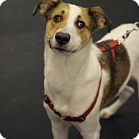 Adopt A Pet :: Cooper - Jupiter, FL