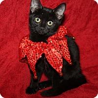 Adopt A Pet :: Velvet - Marietta, OH