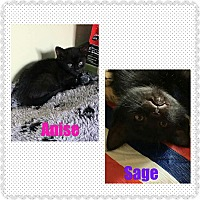 Adopt A Pet :: Kittens! (F) - bridgeport, CT