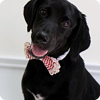 Adopt A Pet :: Manny - Picayune, MS