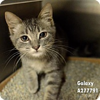 Adopt A Pet :: GALAXY - Conroe, TX