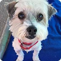 Adopt A Pet :: Biggie - Seal Beach, CA