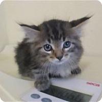 Adopt A Pet :: Hermione - Kailua-Kona, HI