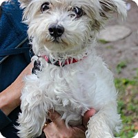 Adopt A Pet :: Lily - Jupiter, FL