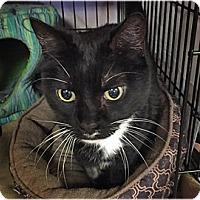 Adopt A Pet :: Evie - Milford, MA