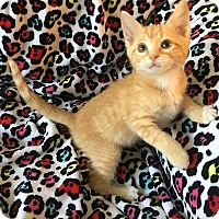 Adopt A Pet :: Shortcake - Tampa, FL