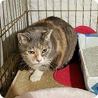 Adopt A Pet :: Baby - Quail Valley, CA