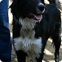 Adopt A Pet :: Fraser - Bellevue, NE