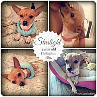 Adopt A Pet :: Starlight - San Antonio, TX
