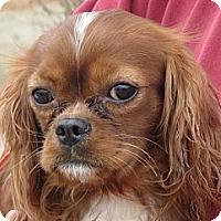 Adopt A Pet :: Lynus - Salem, NH