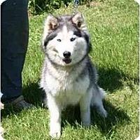 Adopt A Pet :: Angel - Belleville, MI