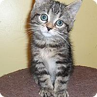 Adopt A Pet :: Fraction - Acme, PA