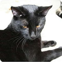 Adopt A Pet :: Thunderbolt - Bonita Springs, FL