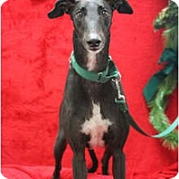 Adopt A Pet :: Toby - Carlsbad, CA