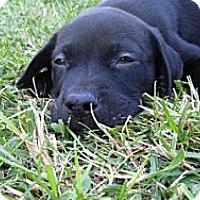Adopt A Pet :: Milkeyway - Mechanicsburg, PA