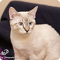 Adopt A Pet :: Fred - Fountain Hills, AZ