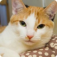 Adopt A Pet :: Naomi - Irvine, CA