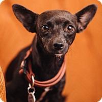 Adopt A Pet :: Beth - Portland, OR