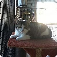 Adopt A Pet :: Grizzly - Caistor Centre, ON