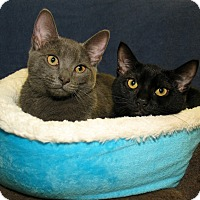 Adopt A Pet :: Gary and Gale - Milford, MA