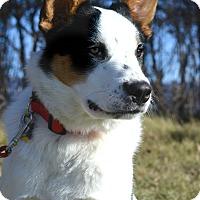 Adopt A Pet :: Gus - Delano, MN