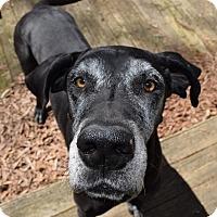 Adopt A Pet :: Winnie - Raleigh, NC