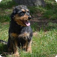 Adopt A Pet :: Lita - Mountain Center, CA