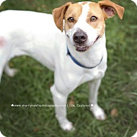 Adopt A Pet :: Maggie - Fayetteville, NC