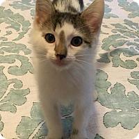Adopt A Pet :: Gyles - Gainesville, FL