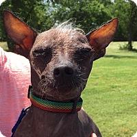 Adopt A Pet :: Bogie - Wyanet, IL
