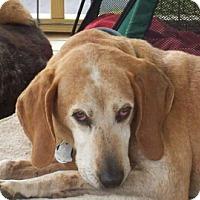 Adopt A Pet :: Harold - Bealeton, VA