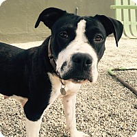 Adopt A Pet :: Iris - Los Angeles, CA